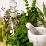 Особенности лекарственных растений